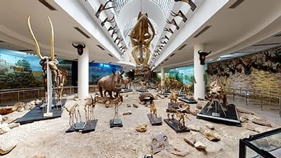 Zoological Museum-Giza Zoo